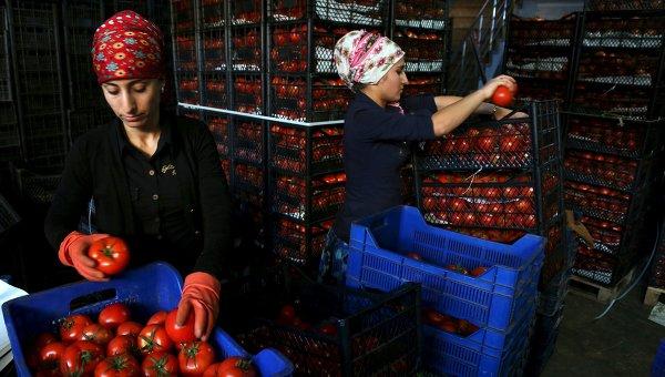 Песков обясни разликата между санкциите срещу Русия и мерките по отношение на Турция