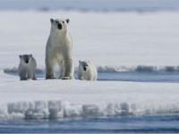Археологическа експедиция е открила следи от древни ловци на бели мечки в Арктика