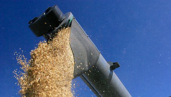 WSJ: През 2016 г. Русия може да стане най-големият износител на пшеница в света