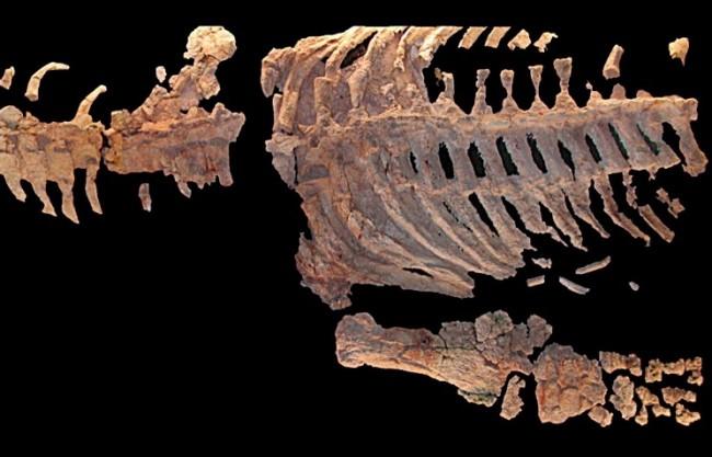 В Русия откриха нов вид морски динозавър с 5 пръста