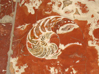 7 палеонтологични находки в московското метро