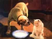 Кучета и котки: кой е по-умен