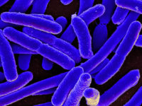 Руски биолози откриха нови свойства на имунитета на бактериите