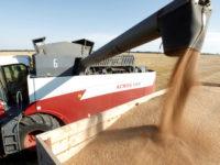 Русия доминира пазара на жито