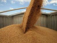 До 4 милиона тона зърно може да изнесе Русия до края на този месец