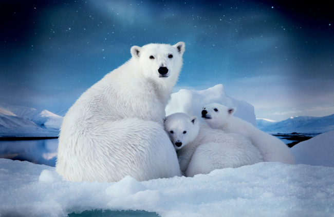 Руска екзотика: Как Русия ще привлича туристи в Арктика