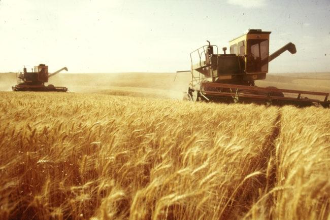 Русия се очертава като износител № 1 на пшеница в световен мащаб